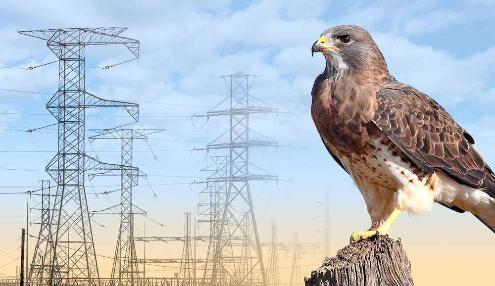 Avian-Friendly Approaches to Power Lines