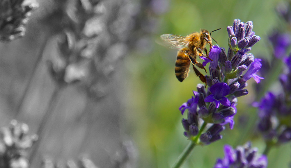 Remediation Turns a Superfund Site into a Home for Honeybees